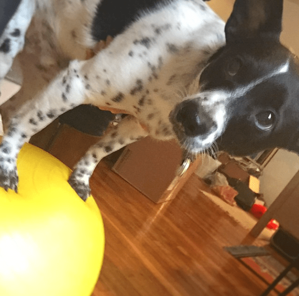 Henry's Story - Exercise Ball Therapy