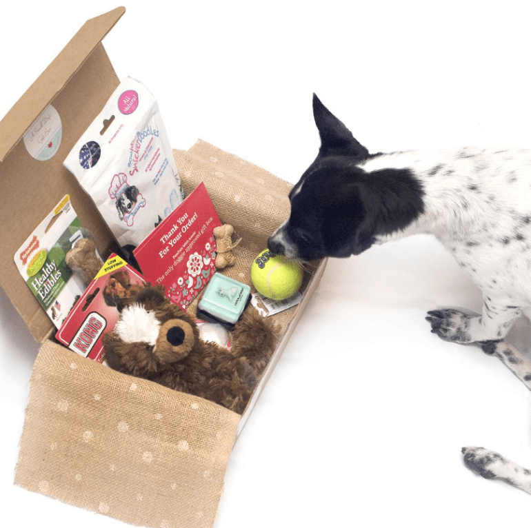 The Broke Dog: Save Money With Dog Subscription Boxes