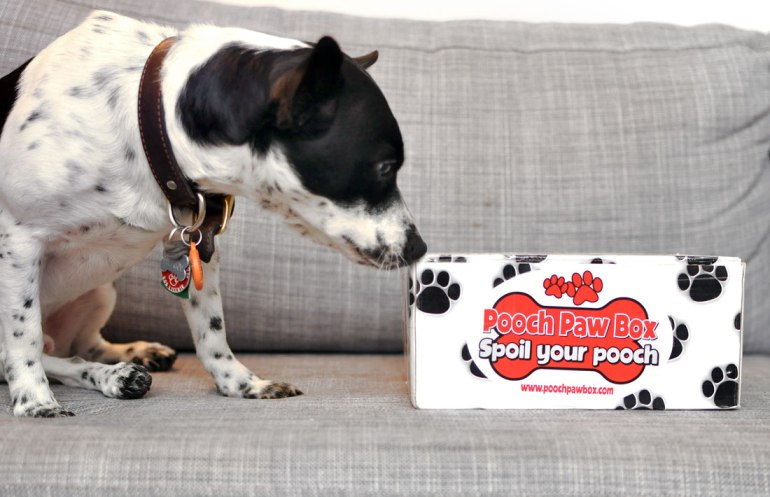 The Broke Dog: Pooch Paw Box January 2016 Unboxing and Review