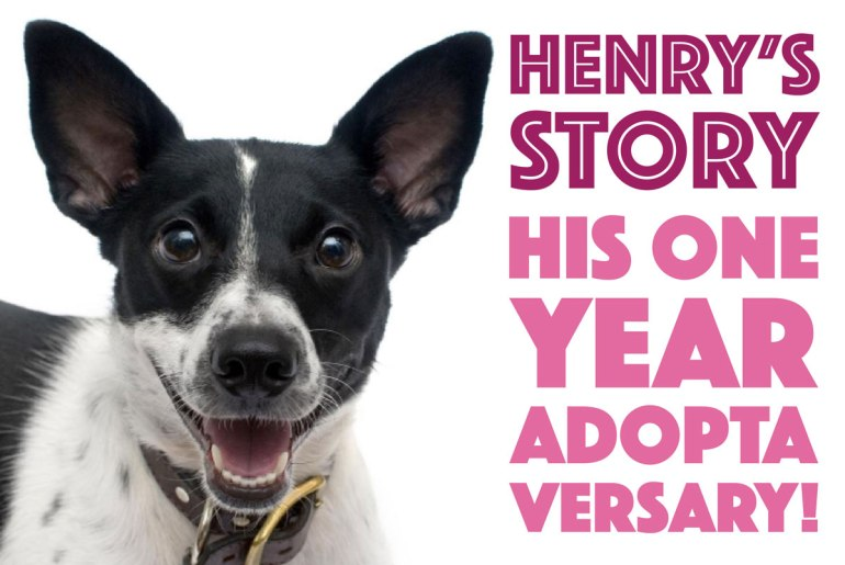 Henry's Story on The Broke Dog