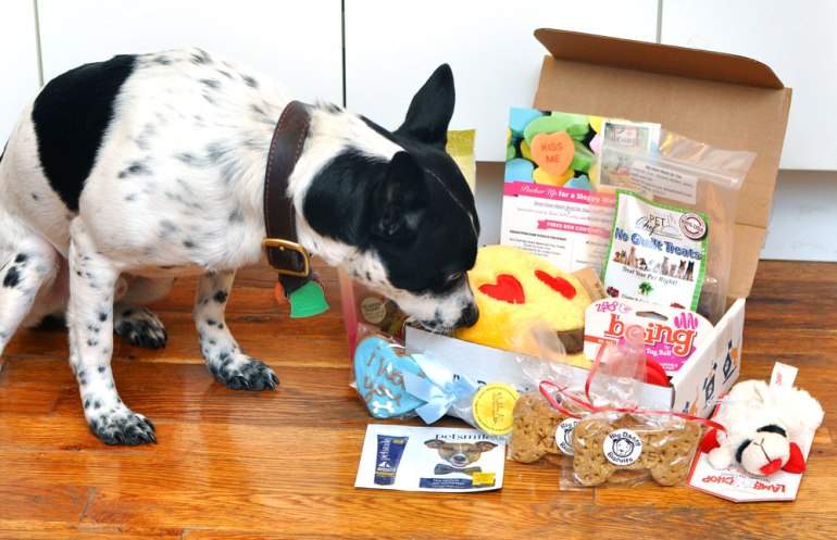 Henry felt the LOVE in his February Valentines-themed Pooch Perks box! Click to see what was inside!