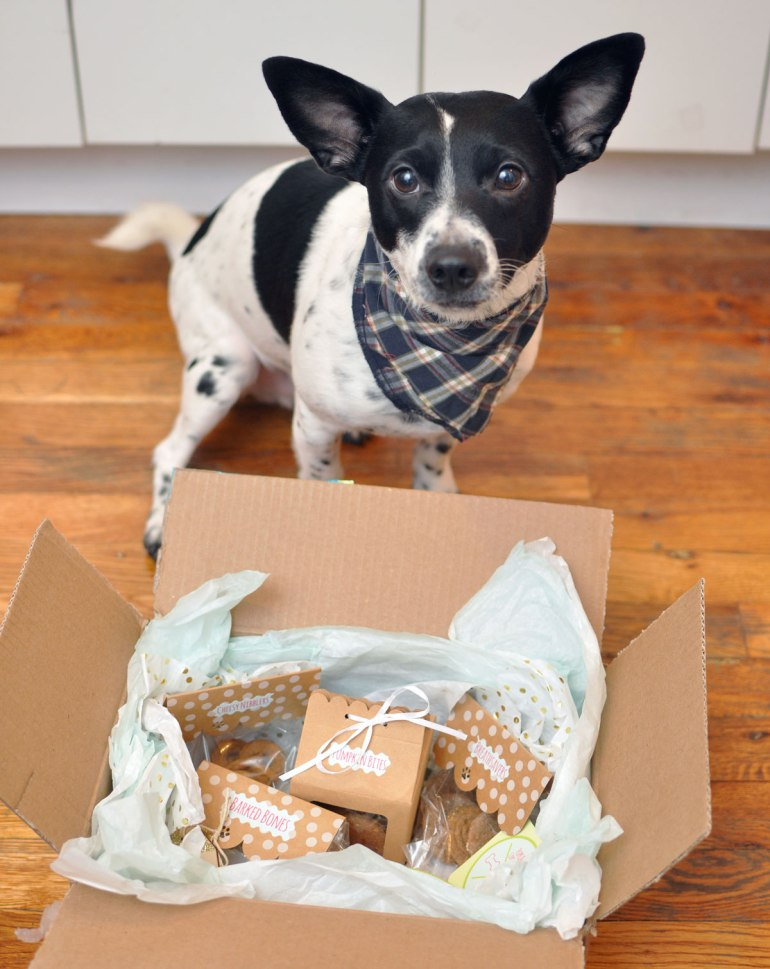 Today's Small Business Spotlight highlights Pupcake Confections, a new bakery for dogs started by Victoria Vargas, a pastry chef in Miami, Florida. Victoria sent Henry a box of goodies to try a few weeks ago, and he loved them so much that I invited her to interview for the blog!