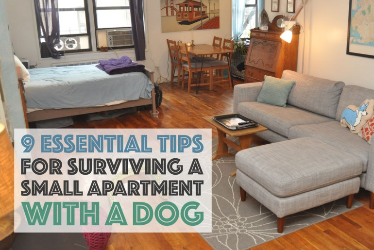 Do you share a small apartment with a dog? It doesn't have to be stressful! Here are nine essential tips to make it easier for both of you.