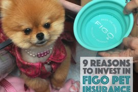 9 Reasons You Should Invest In Figo Pet Insurance