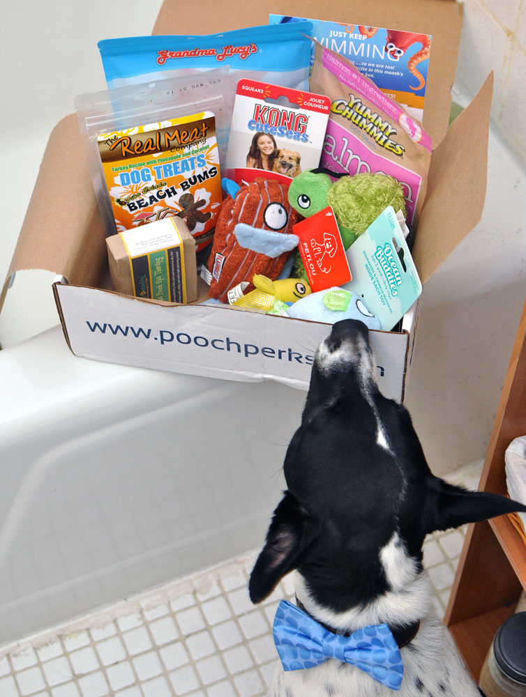 The Pooch Perks June box made quite a SPLASH in our household! This month's theme is a tribute to the new Disney/Pixar movie Finding Dory, a sequel to 2003's Finding Nemo. Inside, Henry and I found a sea of savings on products that are adorable, fun, and delicious!