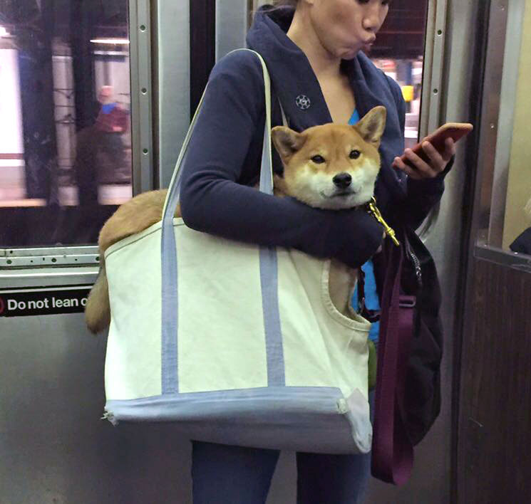 How To Bring Your Dog On The Subway The Broke Dog