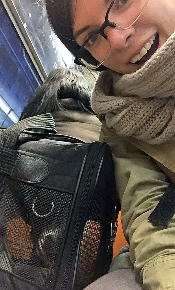 dog in a carrier on the subway