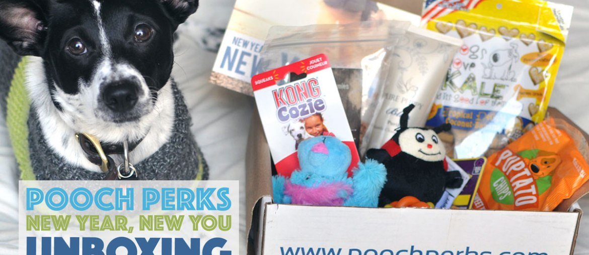 Pooch Perks Unboxing: New Year, New You!