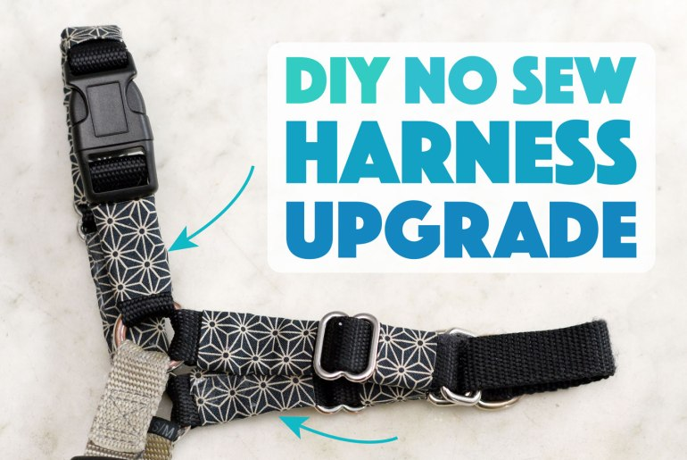 Looking for an easy and inexpensive way to spice up your pup's look? Try this simple DIY no sew dog harness upgrade for a new look any day!
