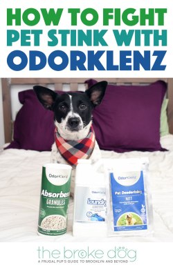 "Dealing with ""dog stink""? OdorKlenz® has your back! We used it to fight anal gland leakages. Keep reading to learn how to fight pet stink with OdorKlenz!"