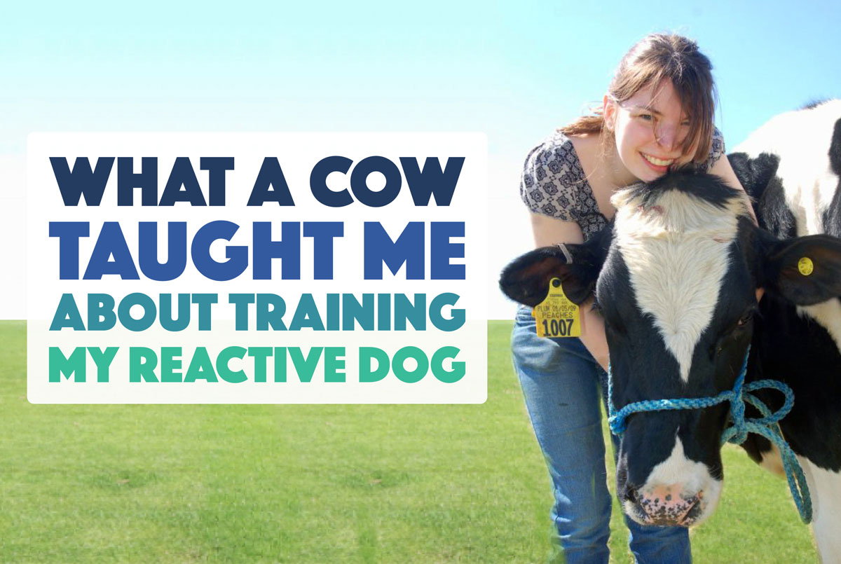 Reactive Dog Training Classes