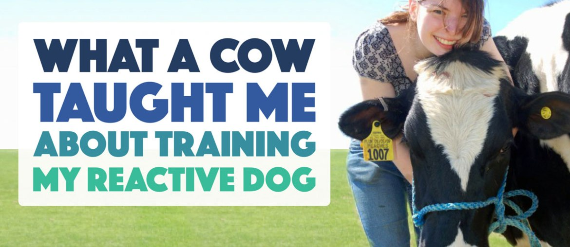 What a Cow Taught Me About Training My Reactive Dog