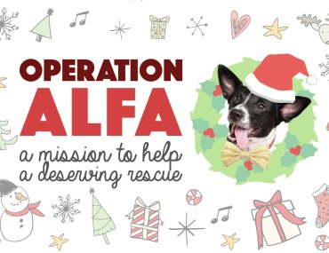Henry and I are so incredibly grateful for our life together and, as a result, love to put together a charitable project at the holidays. This year, we cooked up up atop secret missionto help the organization we can thank for Henry's life! Without further ado: Operation ALFA!