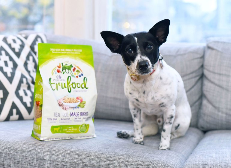 Fuel your pet's summer adventures with Wellness Pet Food! One lucky winner will receive $150 in vouchers for Wellness Pet Food — and not just for dogs!