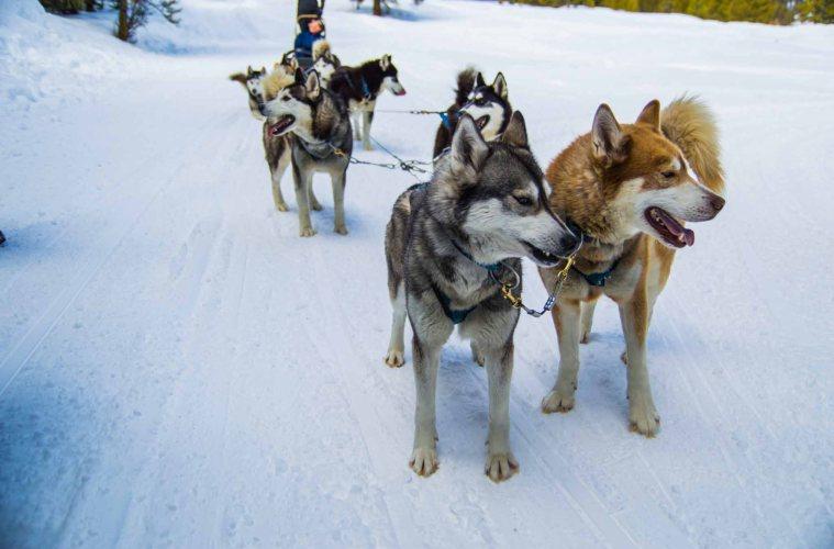 Winter Activities in the Rockies