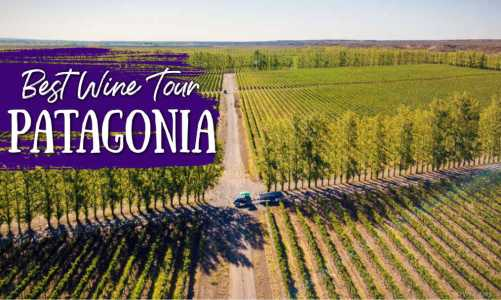 Best Patagonia Wine Tour for Wine Lovers