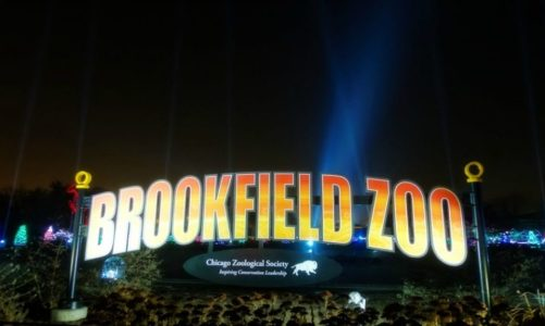 Brookfield Zoo Holiday Magic   Bright Lights. Magical Nights