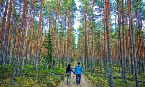Best Day Trips From Tallinn Estonia for Nature Lovers