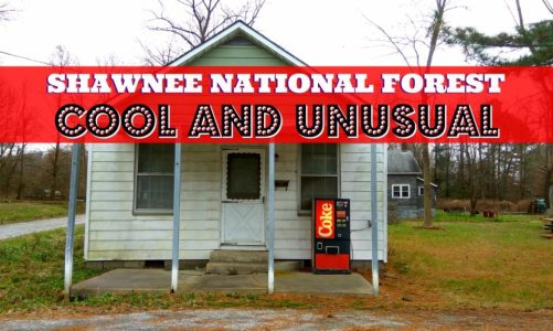 Shawnee Forest Illinois | Cool and Unusual Things to See and Do