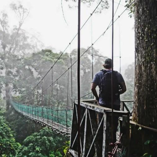 Canopy Walk Borneo Rainforest Lodge