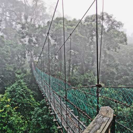 Exploring Borneo Island Hanging Bridges