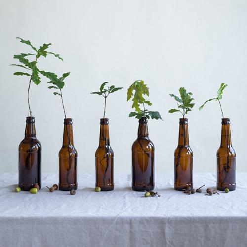 Eco environmentally friendly bottle tree Christmas crackers
