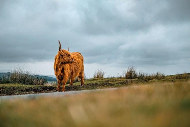 Things to do on Dartmoor