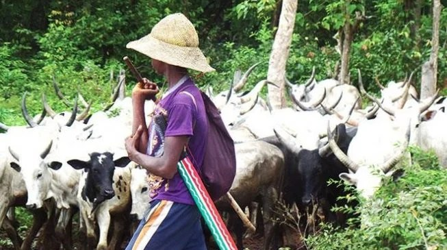 Image result for Herdsmen kill four, injured one in Bakin Kogi