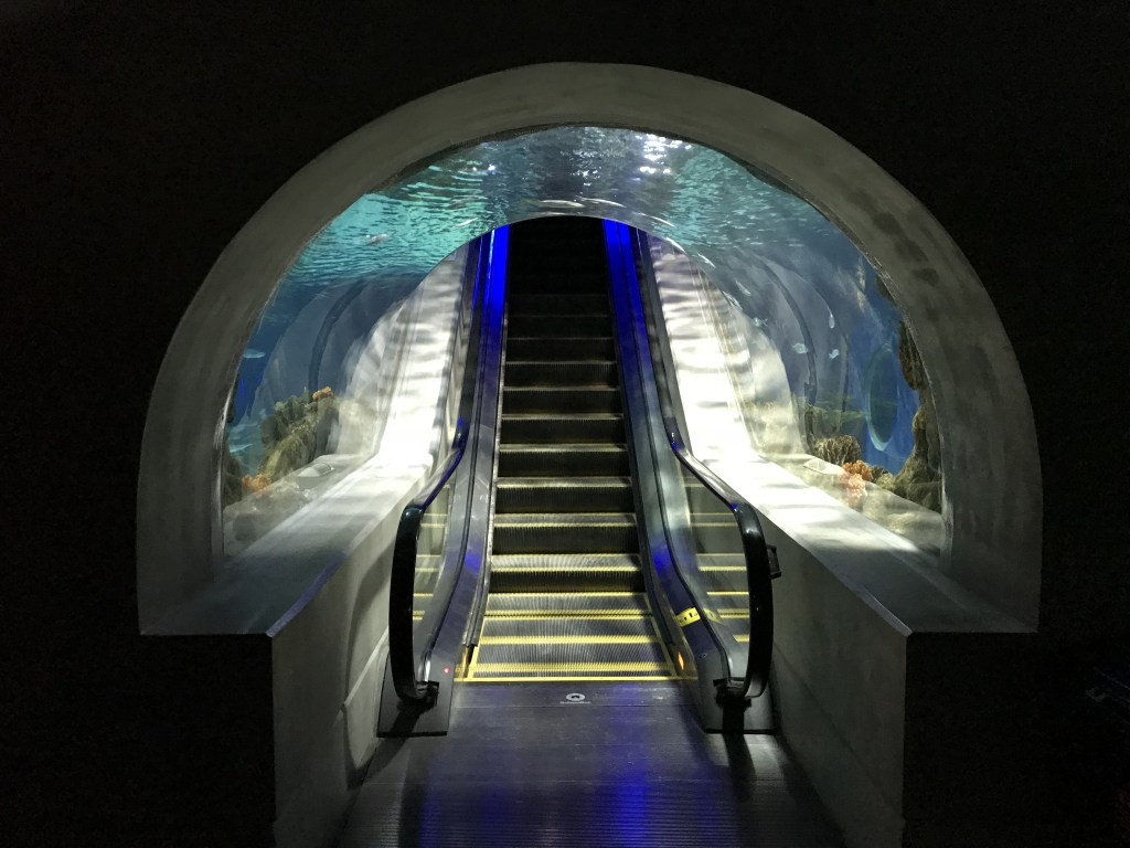 The escalator surrounded by the aquarium is extremely unique.