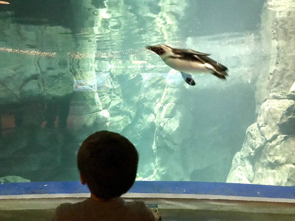 My son was fascinated with the penguins.