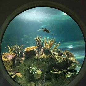 Reasons to Visit the OdySea Aquarium in Scottsdale, Arizona