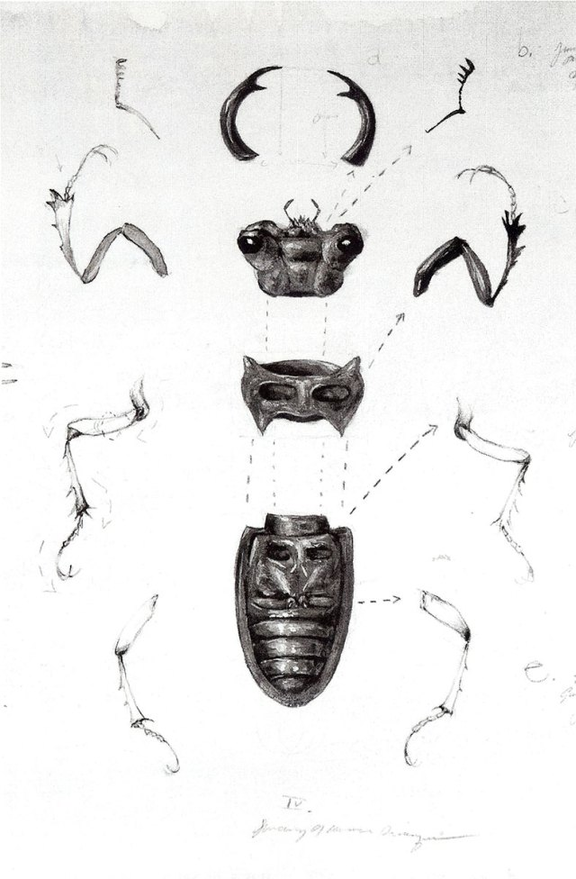 Genomes and Daily Observations (stag beetle), detail, by Suzanne Stryk