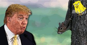 President Trump staring with child-like wonder at a squirrel