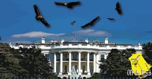 Vultures circling over the White House