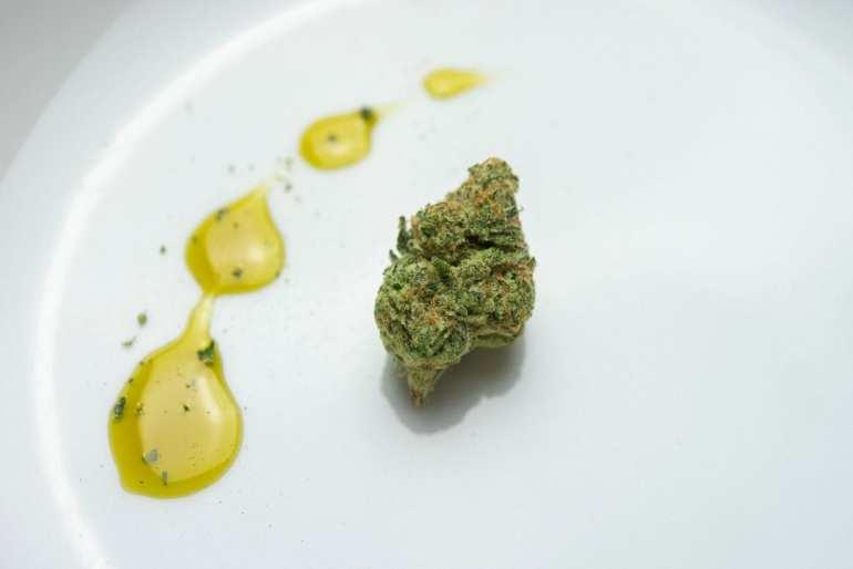 cbd oil drops beside a cannabis bud.