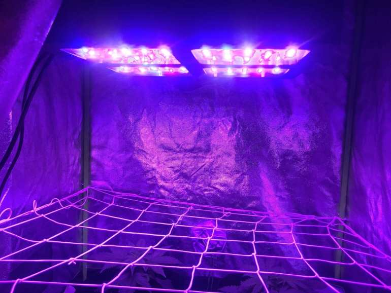1200 LED Grow light. The best LED grow light for indoor grow tent.