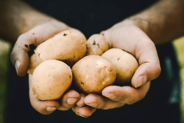 Person with their hands full of potatoes holding them towards the camera