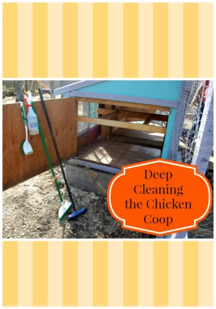Roll up your sleeves, it's time to give the coop a deep cleaning!