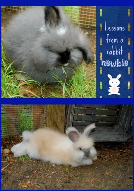 Don't make the same mistakes as us! Learn from our lessons as a rabbit owning newbie