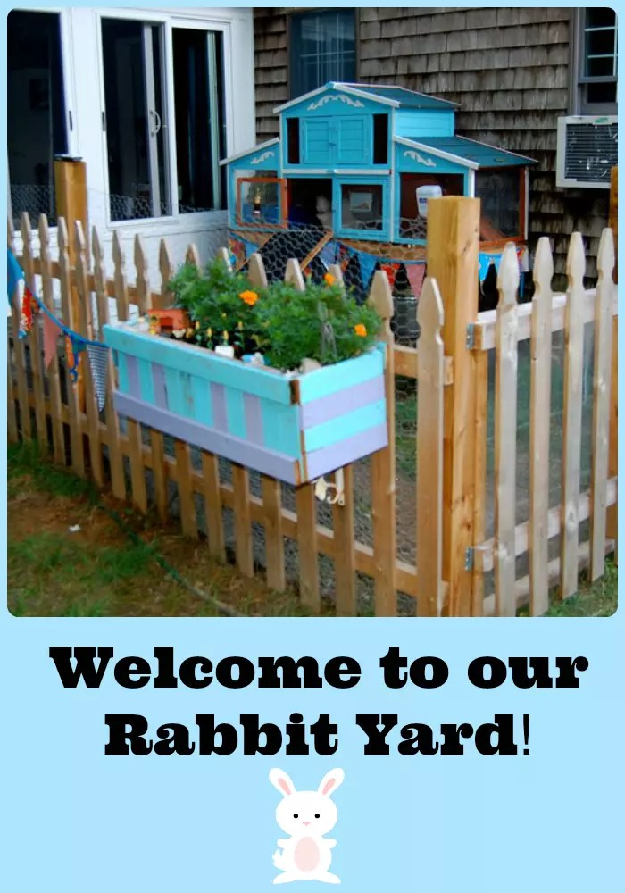 Photo Tour of our Rabbit Yard