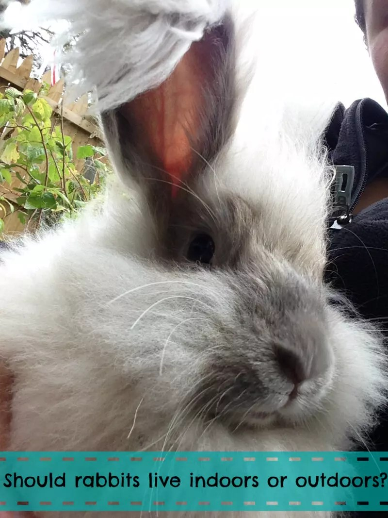 should rabbits live indoors or outdoors