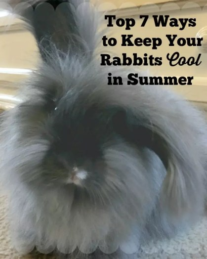 Check out our Top 7 Ways to Keep your Rabbits Cool this Summer!