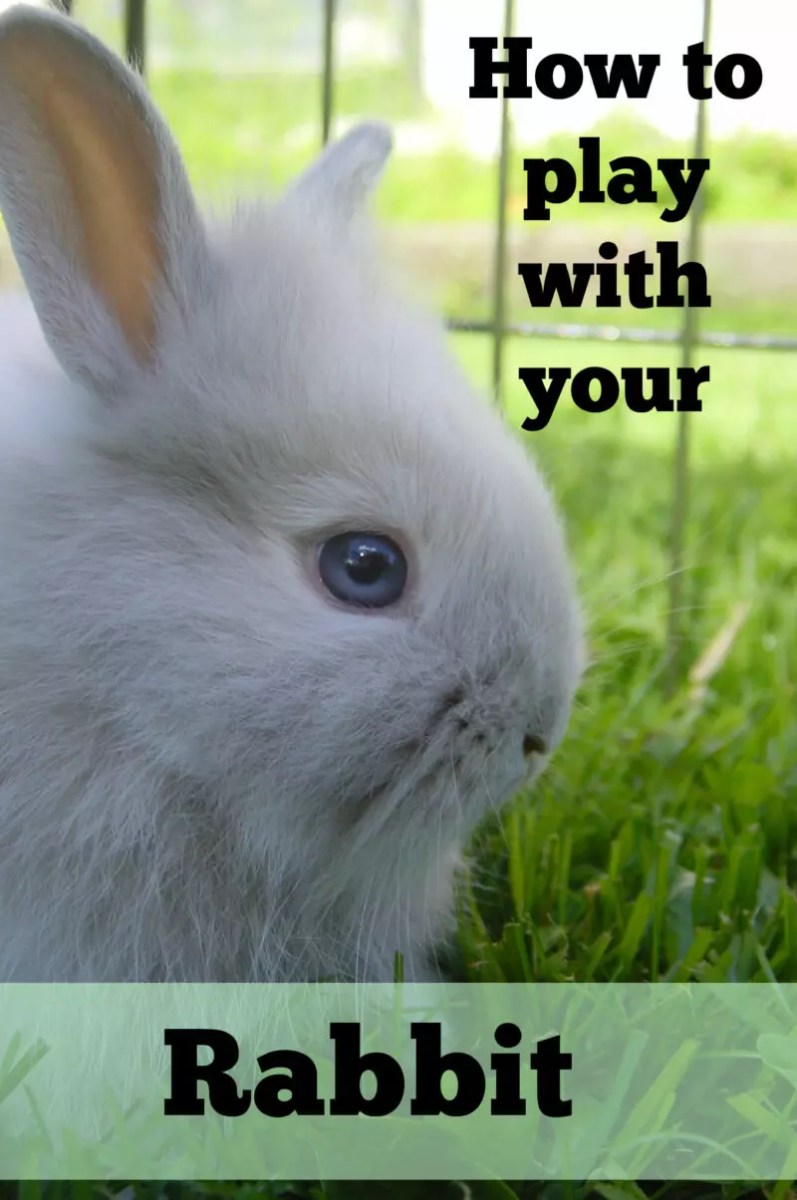 Play Your Card Right On Pinterest: How To Play With Your Rabbit