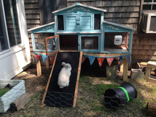 Setting up an Outdoor Rabbit Space