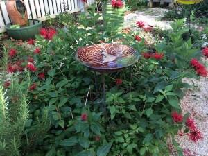 garden-bee-balm