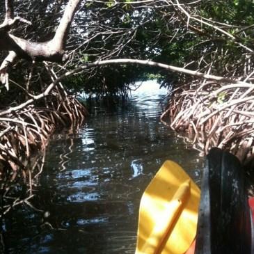 Luminescent Life- Mosquito Bay Vieques, PR