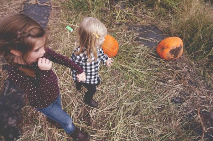 Pumpkin Patch 2 - 03