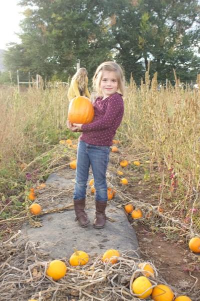 Pumpkin Patch 2 - 07