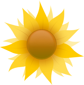 Sunflower growing guide