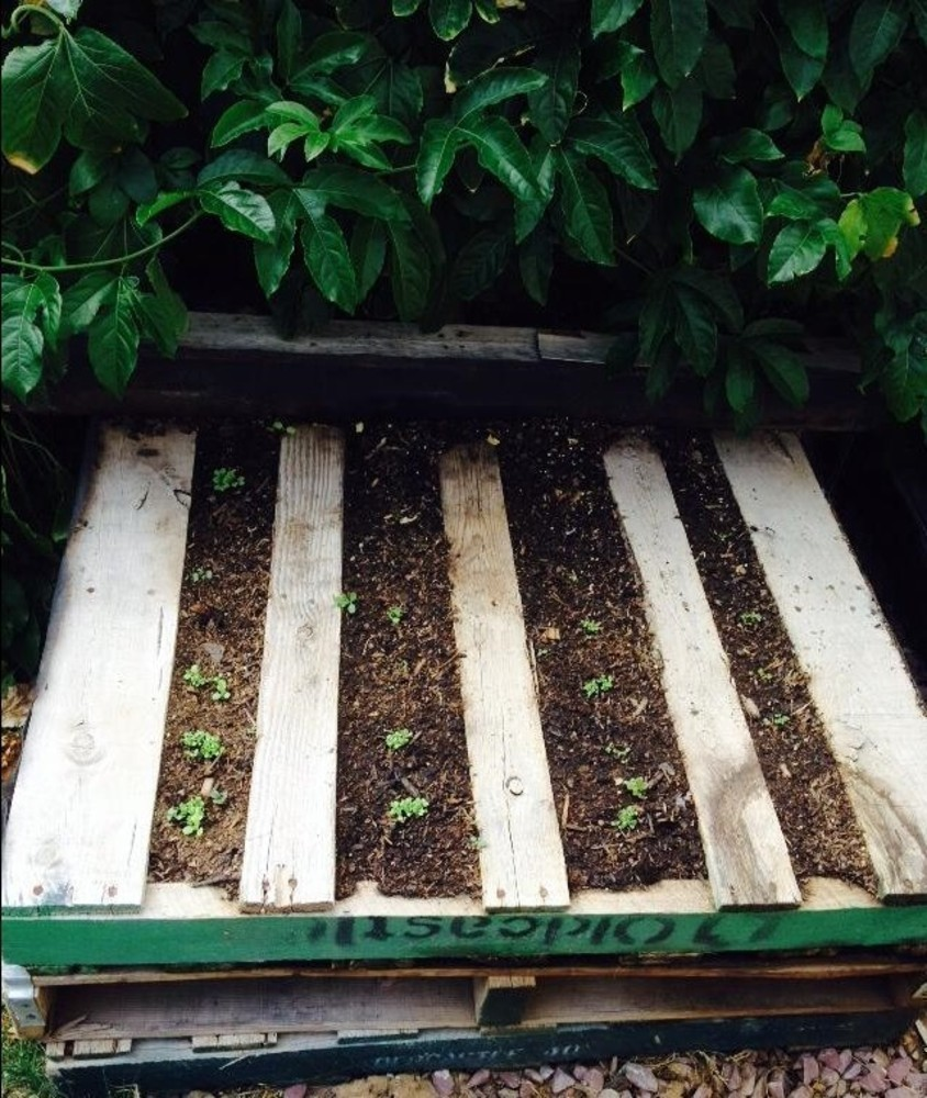 Pallet Wood Raised Garden Bed: Save Money By Reusing Wood Pallets For Raised Garden Beds
